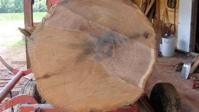 Red Oak Log on Sawmill